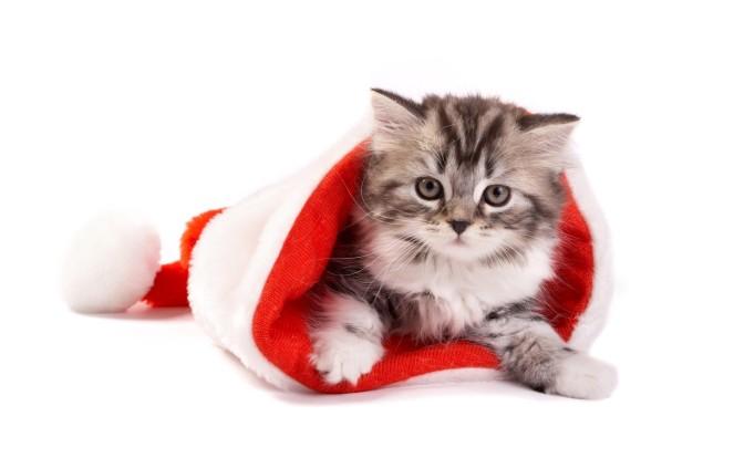 christmas-cat.jpg