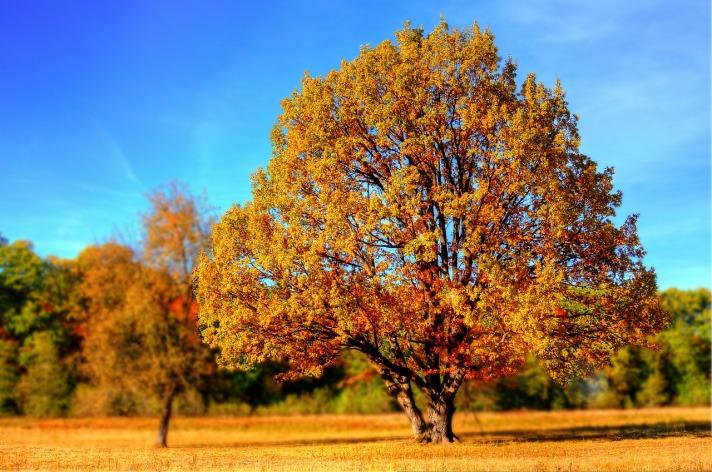 tree-99852_1280