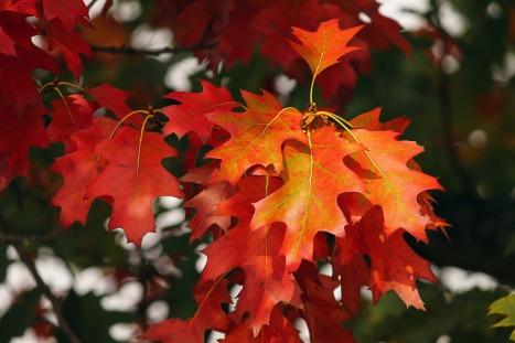 fall-foliage-3705550_1280
